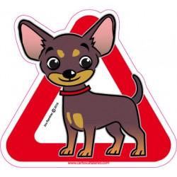 Chihuahua  a bordo - Pegatina