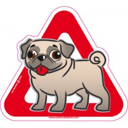 Pug / Carlino  on board -...
