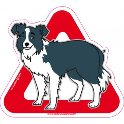 Border Collie on board -...