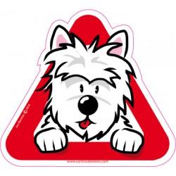 West Highland, Westie, Highland Terrier