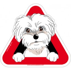 Maltese Bichon on board -...