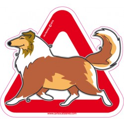 Collie on board - Stickers