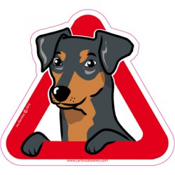 Pinscher on board - Stickers